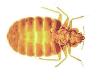 Bed Bug Control Drapers Green
