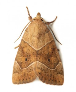 Moth Removal-Pest Control Essex